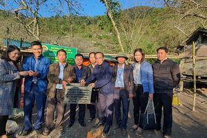 Bà con Kỳ Sơn được hỗ trợ hàng nghìn con giống gà đen địa phương