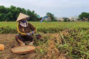 Mô hình nông nghiệp thông minh cần được nhân rộng hơn nữa