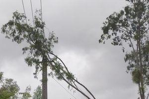 Hơn 160 xã bị gián đoạn cấp điện do ảnh hưởng của bão số 12
