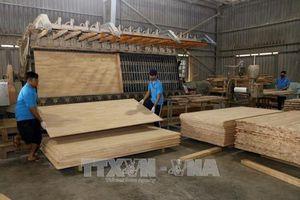 Tuân thủ hệ thống đảm bảo gỗ hợp pháp trong ngành cao su