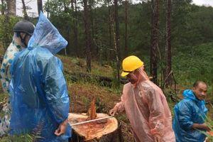 Phát hiện vụ phá rừng nghiêm trọng tại Lâm Đồng