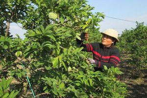 Tây Ninh thu hút đầu tư vào nông nghiệp