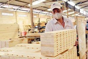 Sản xuất gỗ cao su để xuất khẩu bền vững