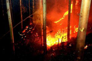 Vĩnh Phúc: Hỏa hoạn thiêu cháy khoảng 7ha rừng trồng ở xã Ngọc Thanh