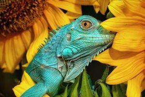 2 tác phẩm chụp tại Quảng Bình, Quảng Ngãi lọt top 50 bức ảnh đẹp nhất Animals2020