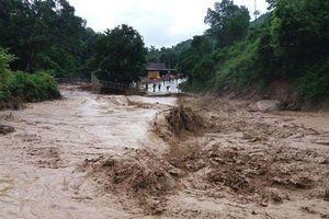 Chuyên gia: Xây dựng quá nhiều nhà máy thủy điện dẫn tới việc mất rừng
