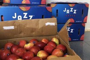 Ngăn chặn 1,2 tấn trái cây nhập lậu