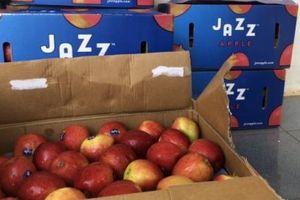 Phát hiện và bắt giữ gần 1,2 tấn trái cây nhập lậu