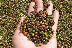 Xuất nhập khẩu ngày 14-16/11: 'Giải cứu' thành công 3 triệu USD hồ tiêu mắc kẹt tại Nepal, thương mại Việt Nam-Trung Quốc cán mốc 100 tỷ USD