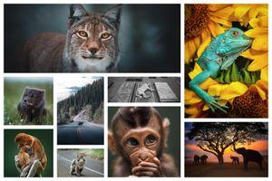 15 bức ảnh đẹp nhất từ cuộc thi #Animals2020