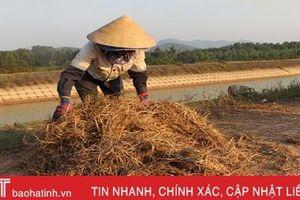 Sau mưa lũ, nông dân Hà Tĩnh chật vật tìm thức ăn cho gia súc