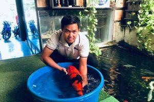 9X kiếm tiền tỷ nhờ nuôi cá Koi