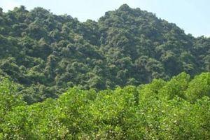 Bộ Nông nghiệp phản đối dự án hơn 38ha 'phá' rừng tự nhiên