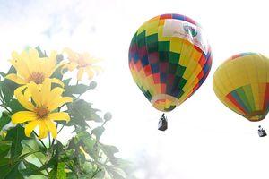 Đến Ba Vì ngắm hoa dã quỳ trên khinh khí cầu
