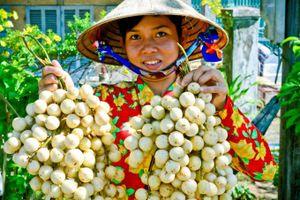 Cần Thơ hướng đến sản xuất trái cây bền vững