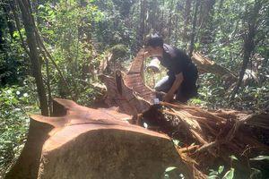 Gia Lai chỉ đạo xử lý vụ phá rừng gần trụ sở ủy ban xã