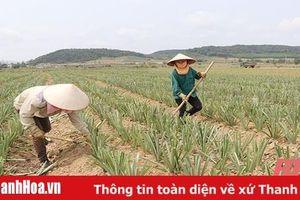 Xã Hà Long phát triển sản xuất, nâng cao thu nhập cho người dân