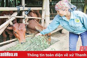 Hiệu quả sau 12 năm thực hiện Nghị quyết 30a của Chính phủ trên địa bàn tỉnh Thanh Hóa