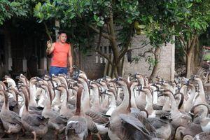'Khéo' làm trang trại, thu 600 triệu đồng/ha ở Lạng Giang