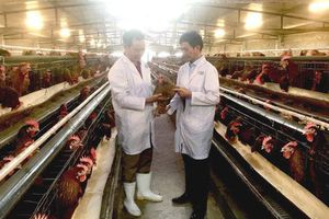 Hướng tới nền chăn nuôi bền vững