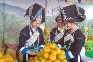 Tuần lễ quýt Mường Khương và các sản phẩm nông nghiệp Lào Cai
