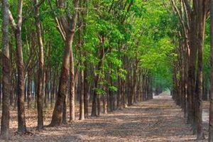 Thành tích 'che phủ rừng' và sự thật qua các con số