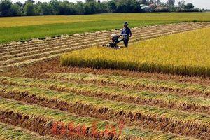 Sóc Trăng và Hải Dương được chuyển mục đích sử dụng đất lúa
