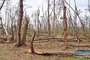 Sớm khôi phục rừng phòng hộ ven biển