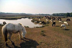 Lai tạo giống ngựa phục vụ thể thao và du lịch
