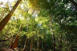 Hàng chục ha rừng tự nhiên được... 'cứu': Kịp thời, cần thiết