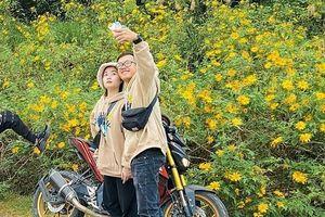 Giới trẻ đua nhau 'check-in' hoa dã quỳ rực rỡ tại Ba Vì