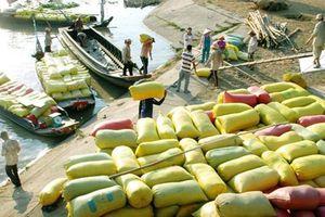 Giá lúa gạo hôm nay ngày 22/11: Cuối tuần giá lúa gạo đi ngang