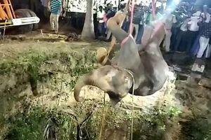 Giải cứu voi rơi xuống giếng bằng cần cẩu