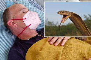 Vừa khỏi sốt rét, sốt xuất huyết, COVID-19 thì bị rắn hổ mang cắn