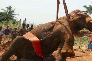 12 giờ giải cứu con voi bị mắc kẹt dưới giếng ở Ấn Độ