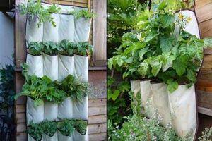 Độc đáo mô hình kỹ thuật trồng rau sạch bằng túi vải ăn quanh năm