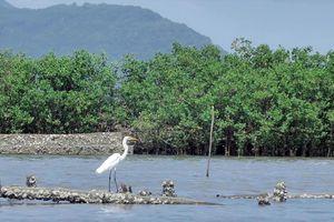 Những mảng rừng, vừa gây rừng vừa giúp dân xóa đói giảm nghèo, làm kinh tế rừng bền vững