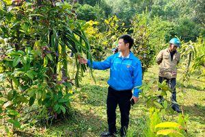 Ba Chẽ: Đồng bộ triển khai các giải pháp để cán đích huyện Nông thôn mới