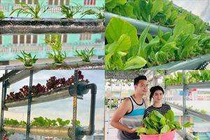 Ghé thăm vườn rau thủy canh trồng trên sân thượng của Thanh Duy - Kha Ly