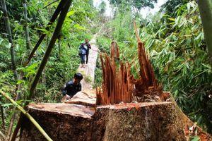 Bắt kẻ phá gần 8 ha rừng ở Phú Quốc