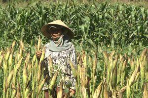 Mô hình CSA nâng cao nhận thức của nông dân