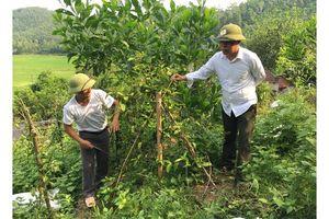 Nguồn lực mới cho công tác bảo vệ rừng