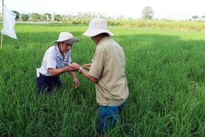 Nhân rộng chương trình quản lý dịch hại tổng hợp trên cây trồng