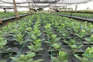 Tiếp tục hỗ trợ đầu tư phát triển kết cấu hạ tầng đối với Hợp tác xã nông nghiệp tỉnh Nam Định