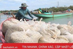 Người nuôi ngao ở Hà Tĩnh khôi phục sản xuất sau mưa lũ