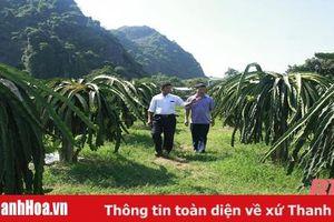 Phát triển cây thanh long ruột đỏ ở thị xã Bỉm Sơn