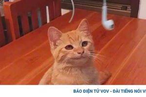 Những bằng chứng cho thấy mèo là loài vật thống trị cả thế giới