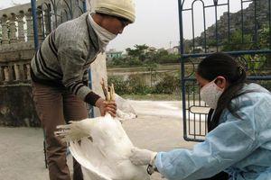 Vì sao 154 nhân viên thú y Hà Nội bị chấm dứt hợp đồng lao động?