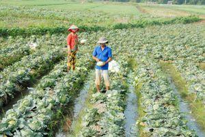 Hậu Giang chuyển đổi cây trồng thích nghi biến đổi khí hậu
