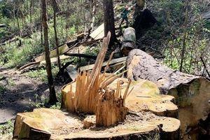 Gỗ lậu lọt nhà tổ trưởng bảo vệ rừng: Lời khai nóng